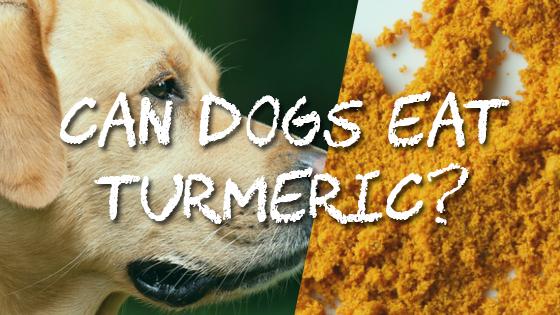 Can Dogs Eat Turmeric? | Pet Consider