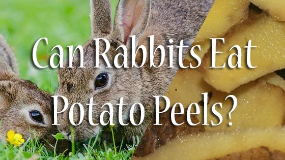 Can Rabbits Eat Potato Peels? | Pet Consider