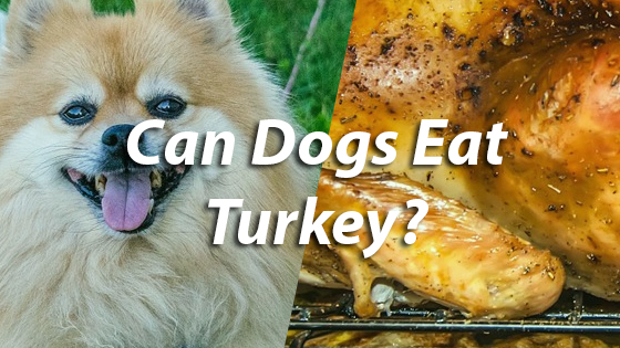 can you give a dog turkey