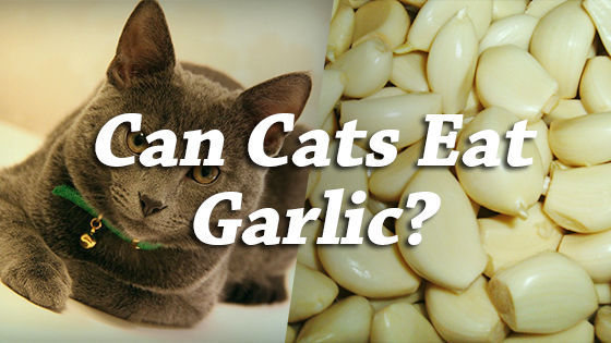 Garlic Flea Treatment For Cats