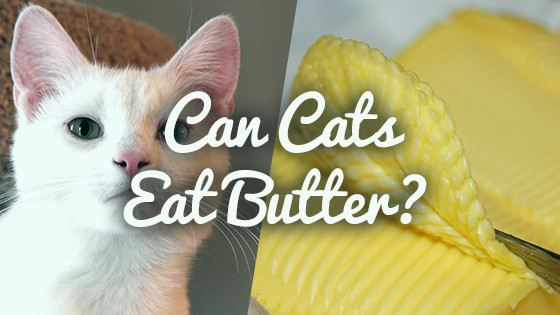 What Foods Do Siamese Cats Eat