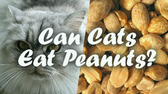 kibble cat food