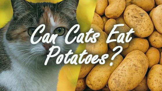 Dogs Eat Potatoes How Often