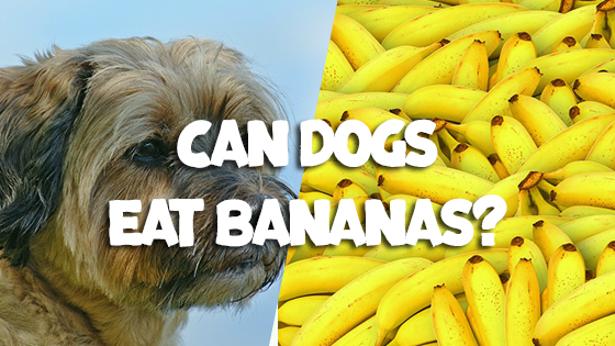 How Often Can You Give A Dog Banana