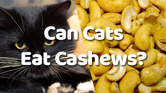 Can Dogs Eat Cashew Peanuts