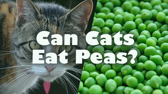 can cats eat peas