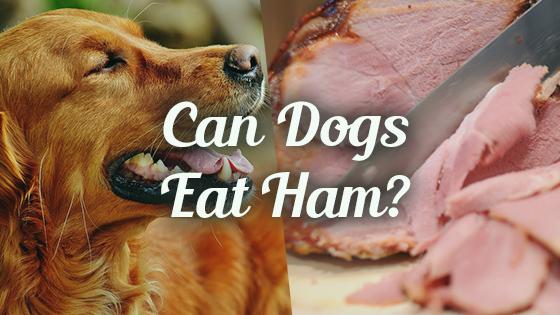 Can My Dog Eat Turkey Ham