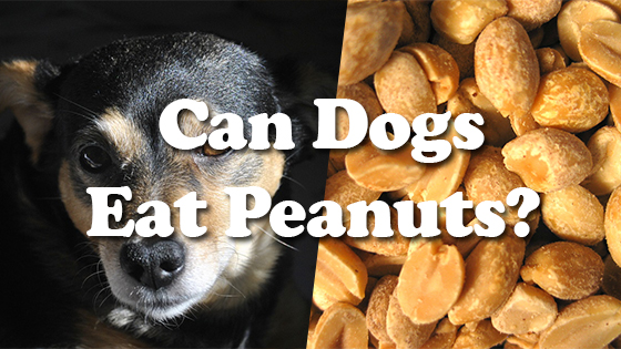Can Dogs Have Roasted Almonds