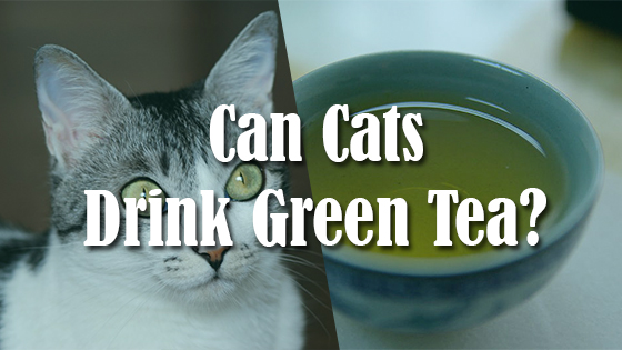 Can Dogs Drink Green Tea