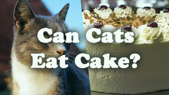 Kittens Eating Cake
