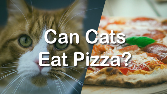 can cats eat pizza pet consider