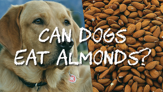 Can Dogs Eat Nuts Safely