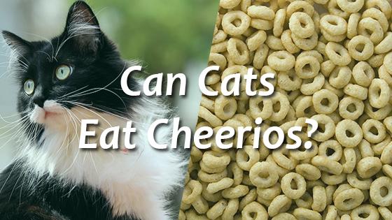 Should Cats Eat Cheetos