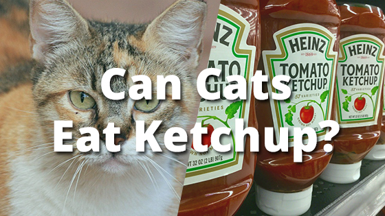 Can Cats Eat Katchup
