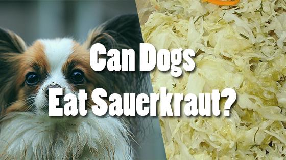 Can Dogs Eat Sauerkraut? | Pet Consider