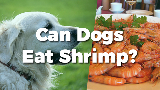 Can Dogs Eat Shrimp Pet Consider