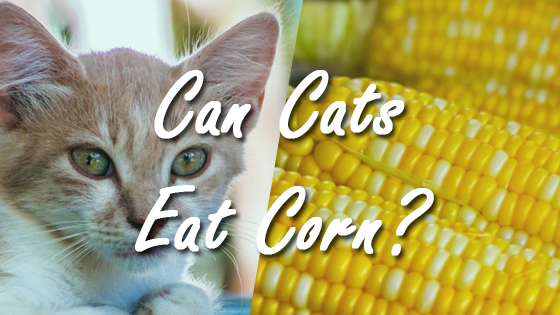 cat loss of appetite