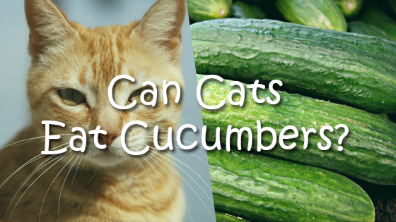 Foods That Are Okay For Cats