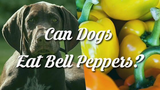 Can Dogs Eat Bell Peppers?