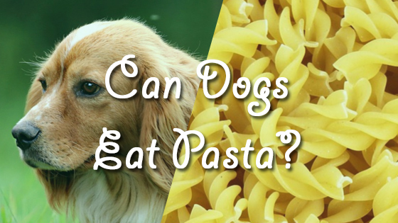 Can Dogs Eat Plain Pasta