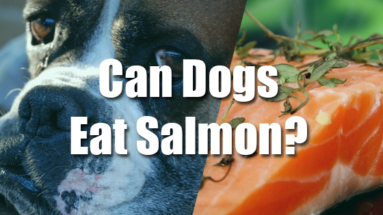 Can Dogs Eat Salmon?