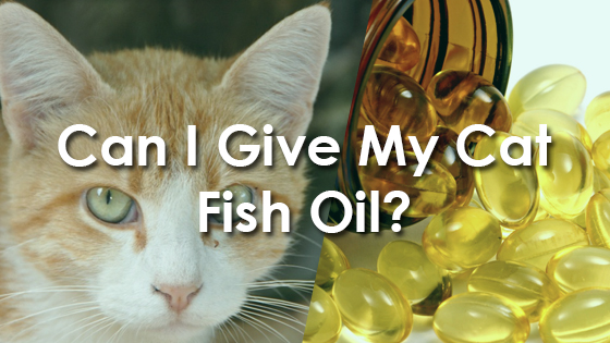 Can I Give My Cat Fish Oil?