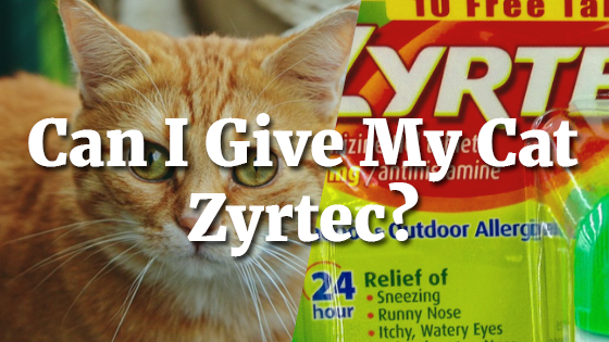 Can I Give My Cat Zyrtec?