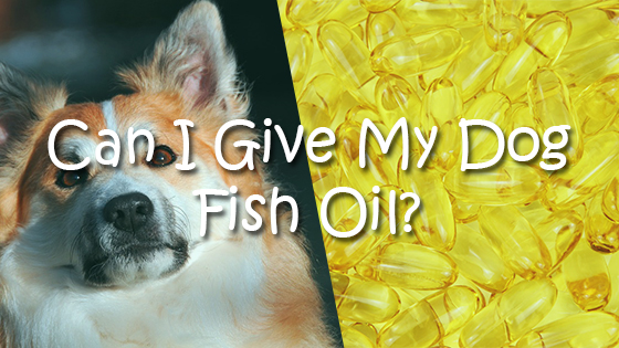 Can dogs eat hazelnuts pet consider for Can i give my dog fish oil for humans
