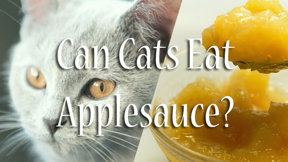 Can Cats Eat Applesauce?