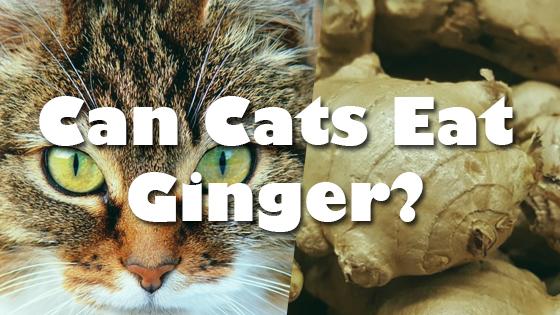 do cats eat roaches