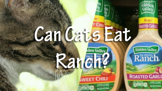 Can Dogs Eat Ranch Dressing