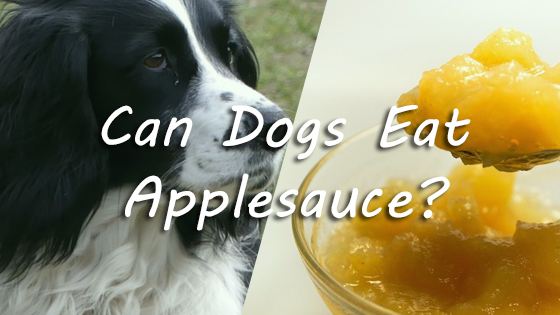 Can my sick dog eat applesauce