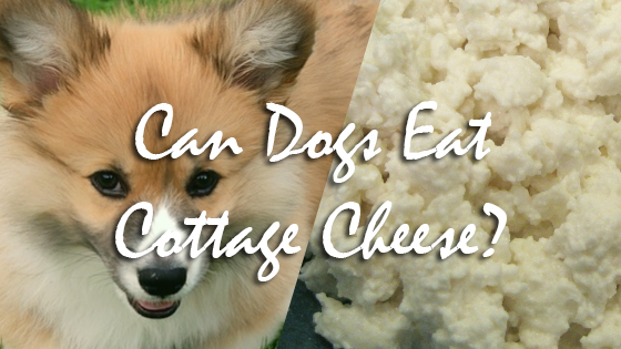 Can Dogs Eat Cottage Cheese?