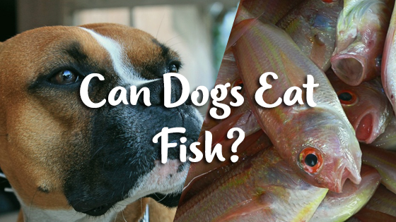 Can Dogs Eat Fish?