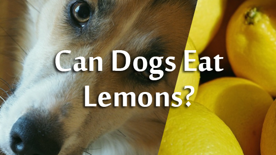 Can Dogs Eat Lemons?