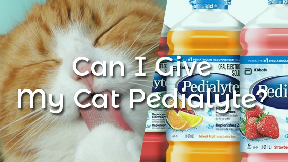 Can I Give My Cat Pedialyte?