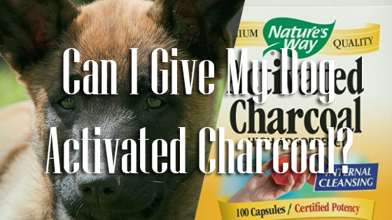 What To Give Dogs When They Eat Dog Feces