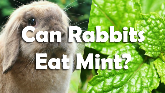 What Food Scraps Can Rabbits Eat