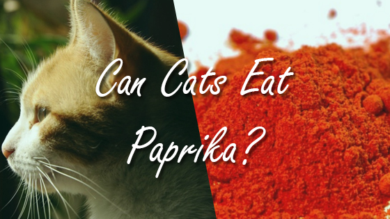 Can Dogs Eat Cat Food Safely