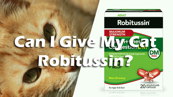 Can I Give My Cat Robitussin Pet Consider