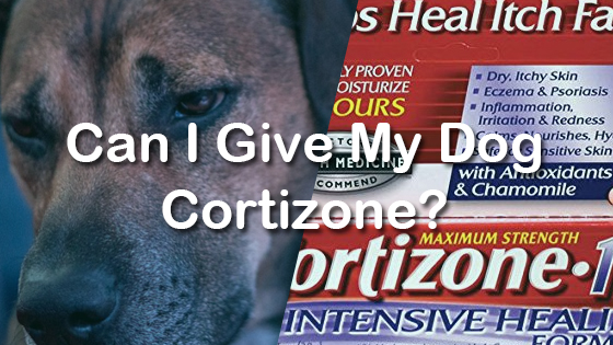 Is Cortisone Safe For Dogs