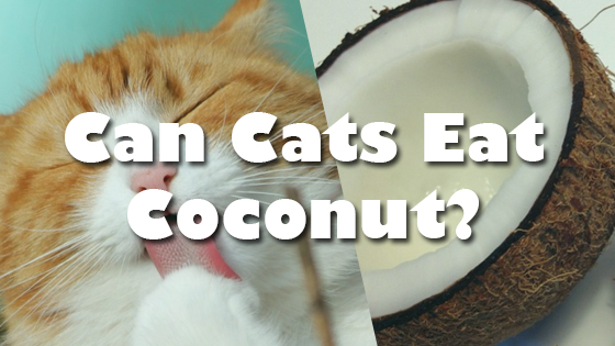 Can Cats Eat Coconut? | Pet Consider