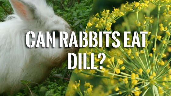 Can Cats Have Dill