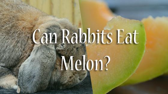 Can Rabbits Eat Melon