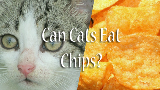 Can You Give Dogs Potato Chips