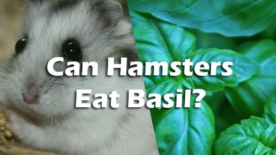 can hamsters have basil pet consider. Black Bedroom Furniture Sets. Home Design Ideas