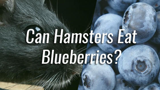 Can Dogs Eat Blueberries Pancakes