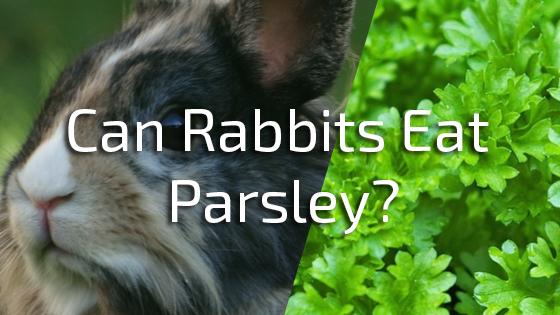 can rabbits eat parsley pet consider. Black Bedroom Furniture Sets. Home Design Ideas