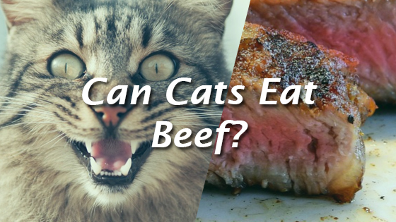 Can Cats Eat Dates