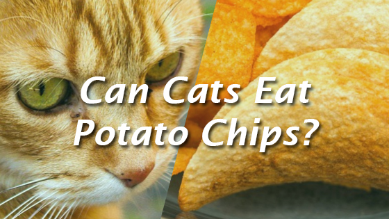 Can You Give Cats Chips